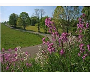 Request a Free 2015 Roadsides in Bloom Calendar